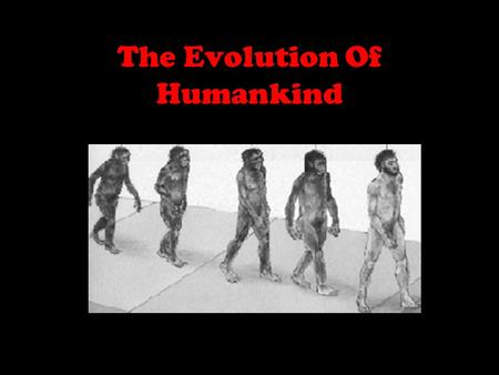 The Evolution Of Humankind Classifications of Humans Kingdom: animal Phylum: chordate (animals with backbones) Class: mammal (with hair, female makes.
