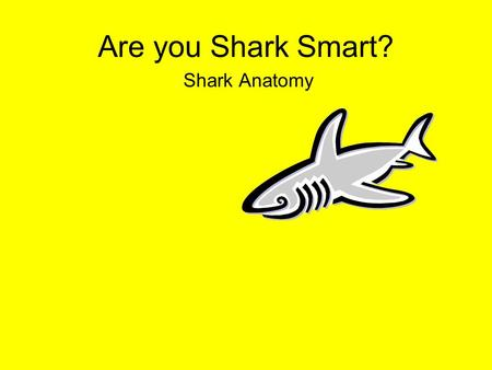 Are you Shark Smart? Shark Anatomy.