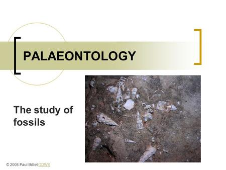 PALAEONTOLOGY The study of fossils © 2008 Paul Billiet ODWSODWS.