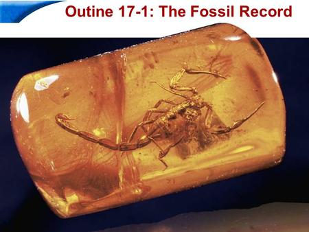 End Show Slide 1 of 40 Copyright Pearson Prentice Hall Outine 17-1: The Fossil Record.