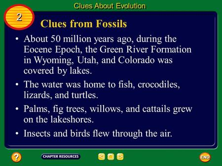 Clues About Evolution 2 Clues from Fossils