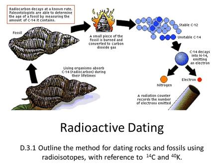 Radioactive Dating D.3.1 Outline the method for dating rocks and fossils using radioisotopes, with reference to 14 C and 40 K.