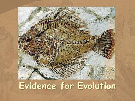 Evidence for Evolution 1. Evidence Evidenceof common ancestry among species comes from many sources. Evidence of common ancestry among species comes from.