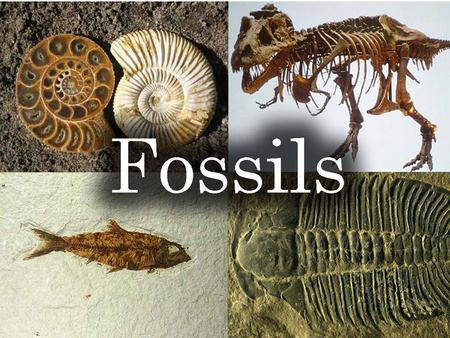 FOSSILS. What is a fossil? Remains of once living animals or plants Represent ancestors of organisms living today.
