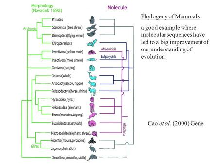 Cao et al. (2000) Gene Phylogeny of Mammals a good example where molecular sequences have led to a big improvement of our understanding of evolution.
