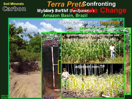 predominant Amazon soils notoriously infertile poor nutrient capacity
