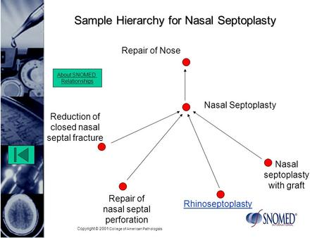 Copyright © 2001 College of American Pathologists Sample Hierarchy for Nasal Septoplasty Repair of nasal septal perforation Nasal septoplasty with graft.