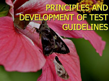 PRINCIPLES AND DEVELOPMENT OF TEST GUIDELINES. Introduction Test Guidelines represent an agreed and harmonized approach for the examination of new varieties.
