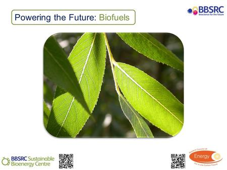 Powering the Future: Biofuels. Activity: Carbohydrate testing Use a variety of chemical tests to identify carbohydrates in plant material Evaluate the.