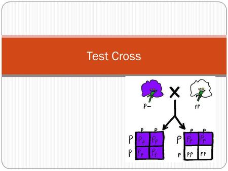 Test Cross.