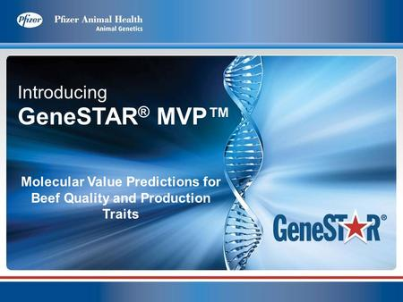 Introducing GeneSTAR ® MVP Molecular Value Predictions for Beef Quality and Production Traits.