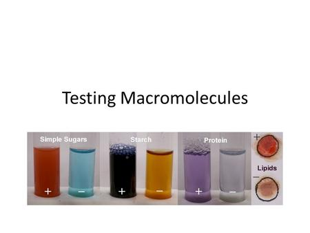 Testing for Lipids, Proteins and Carbohydrates