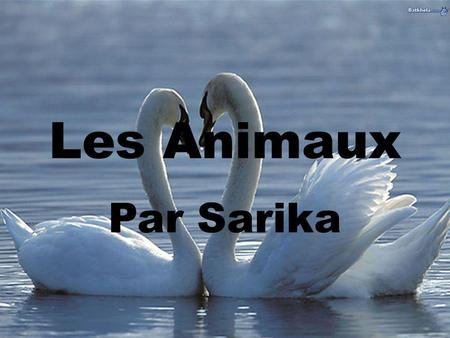 Les Animaux Par Sarika. Question 1. a) un chat b) une grenouille c) un lapin.