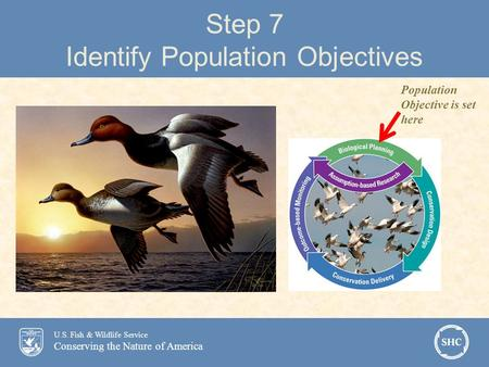 U.S. Fish & Wildlife Service Conserving the Nature of America Step 7 Identify Population Objectives Population Objective is set here.