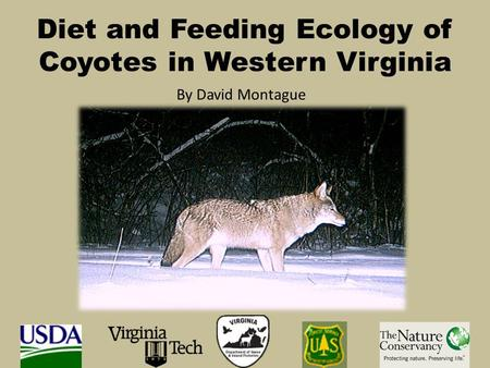Diet and Feeding Ecology of Coyotes in Western Virginia By David Montague.