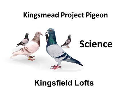Kingsmead Project Pigeon Kingsfield Lofts Science.