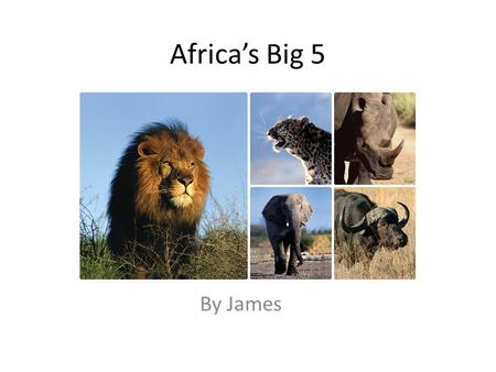 Africas Big 5 By James. Lion Size: shoulder height up to 123 cm in males and as low as 91 cm in females Weight: 150–250 kg for males and 120–182 kg for.