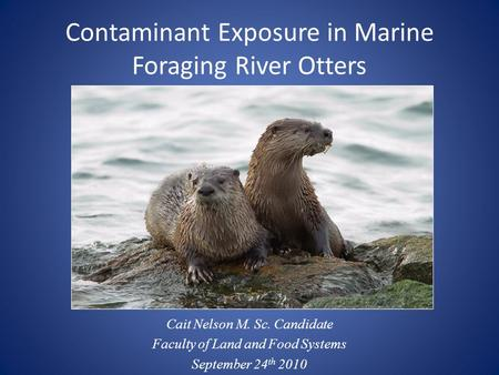 Contaminant Exposure in Marine Foraging River Otters Cait Nelson M. Sc. Candidate Faculty of Land and Food Systems September 24 th 2010.