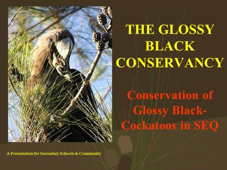 THE GLOSSY BLACK CONSERVANCY Conservation of Glossy Black- Cockatoos in SEQ A Presentation for Secondary Schools & Community.