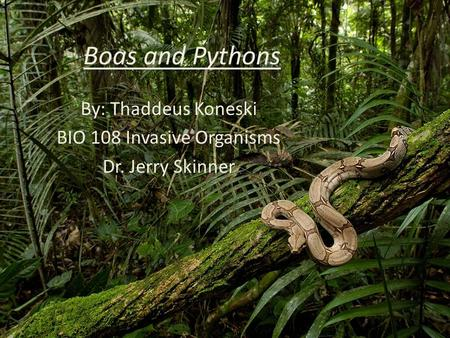 Boas and Pythons By: Thaddeus Koneski BIO 108 Invasive Organisms Dr. Jerry Skinner.