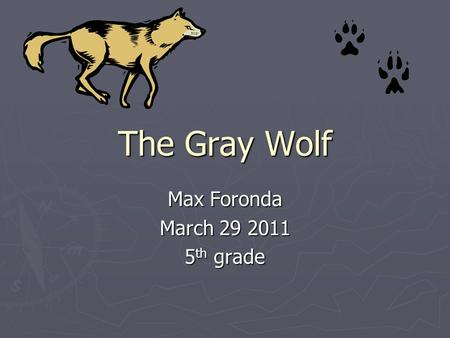 The Gray Wolf Max Foronda March 29 2011 5 th grade.