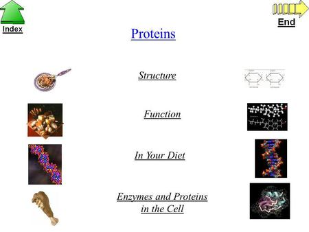 Proteins Structure Function In Your Diet Enzymes and Proteins in the Cell.