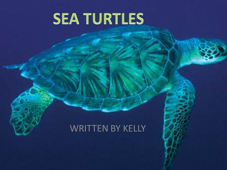 SEA TURTLES WRITTEN BY KELLY.