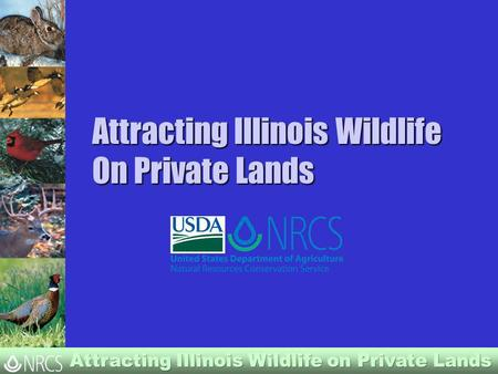 Attracting Illinois Wildlife On Private Lands. Illinois Wildlife Needs 95% of Illinois is privately owned. Wildlife depend on private landowners for habitat.
