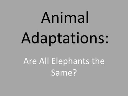 Animal Adaptations: Are All Elephants the Same?. African Elephant The African Elephant is the largest living land animal. These mammals have very strong.