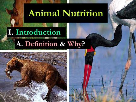 I. Introduction Animal Nutrition A. Definition & Why?