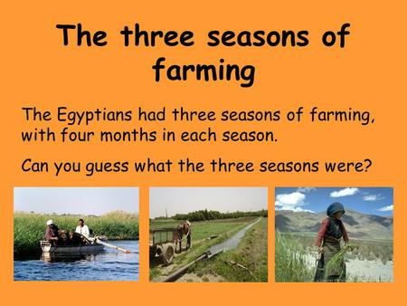 The three seasons of farming The Egyptians had three seasons of farming, with four months in each season. Can you guess what the three seasons were?
