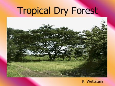 <strong>Tropical</strong> Dry <strong>Forest</strong>                                                              K. Wettstein.