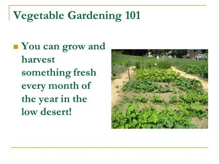 Vegetable Gardening 101 You can grow and harvest something fresh every month of the year in the low desert!