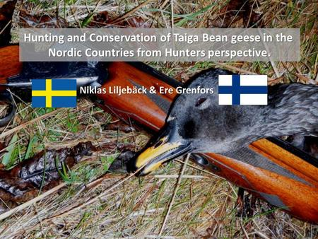 Hunting and Conservation of Taiga Bean geese in the Nordic Countries from Hunters perspective. Niklas Liljebäck & Ere Grenfors.