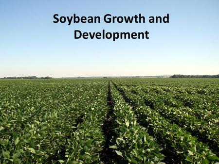 Soybean Growth and Development. Outline The soybean plant Growth staging Vegetative stages Reproductive stages – Bloom – Pod development – Seed development.