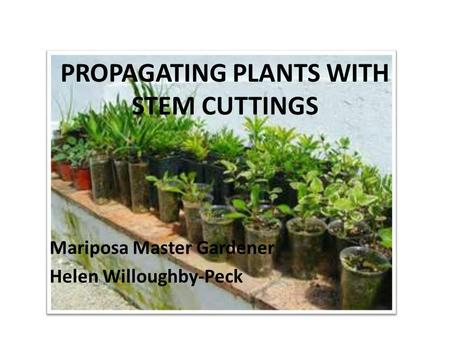 PROPAGATING PLANTS WITH STEM CUTTINGS Mariposa Master Gardener Helen Willoughby-Peck.