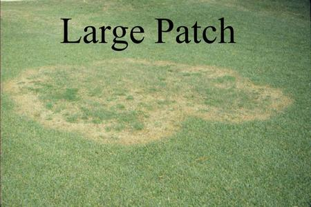 Large Patch.