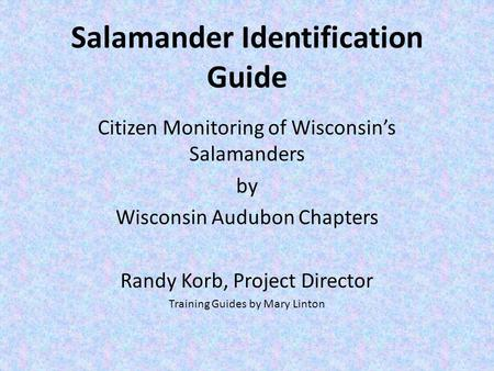 Salamander Identification Guide