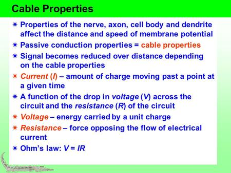 Cable Properties Properties of the nerve, axon, cell body and dendrite affect the distance and speed of membrane potential Passive conduction properties.