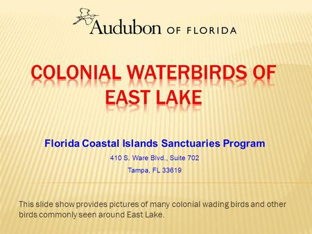 Florida Coastal Islands Sanctuaries Program 410 S. Ware Blvd., Suite 702 Tampa, FL 33619 This slide show provides pictures of many colonial wading birds.