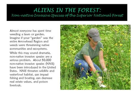 ALIENS IN THE FOREST: Non-native Invasive Species of the Superior National Forest Almost everyone has spent time weeding a lawn or garden. Imagine if your.