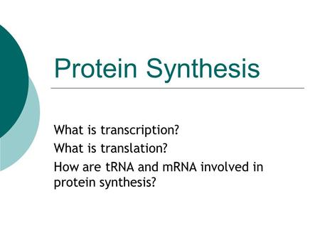 Protein Synthesis What is transcription? What is translation? How are tRNA and mRNA involved in protein synthesis?