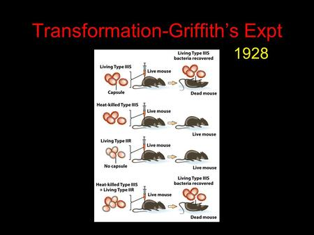 Transformation-Griffith's Expt 1928. DNA Mediates Transformation Convert IIR to IIIS By DNA?