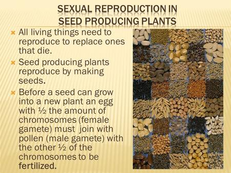 Sexual Reproduction in seed producing plants