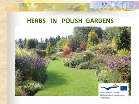 "HERBS IN POLISH GARDENS. Herbs can be a beautiful decoration of our gardens and they also constitute a,,pantry"" of flavors and aromas. Besides, they can."
