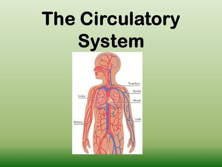 The Circulatory System. What is the Purpose The circulatory system transports needed materials throughout out body including nutrients and gases (oxygen)