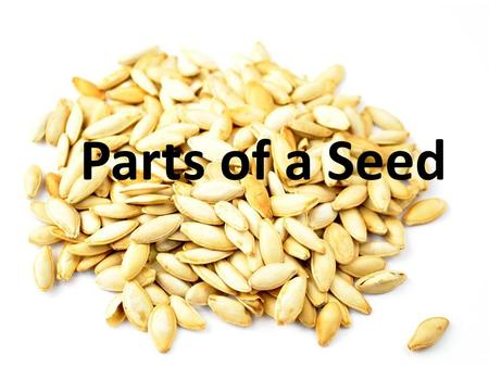 Parts of a Seed.