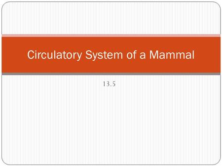 13.5 Circulatory System of a Mammal. 13.5 Circulatory System of a Mammal Learning Objectives: Over large distances, efficient supply of materials is provided.