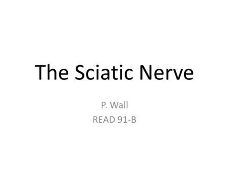The Sciatic Nerve P. Wall READ 91-B. The sciatic nerve passes from the lower spine to the feet.