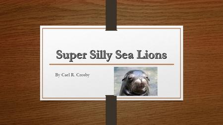 By Cael R. Crosby Sea Lions are Classified in Strange Ways Sea lions are considered Marine Mammals. Males are classified as bulls and females are cows.